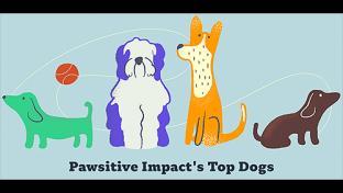 Pawsitive Impact